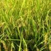花粉症の季節 6月 春・夏の花粉