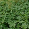 花粉症の季節 10月 秋の花粉