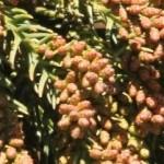 花粉症の季節 12月 冬の花粉